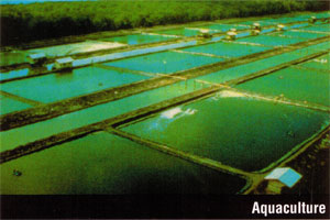Geomembrane Liners for Aquaculture